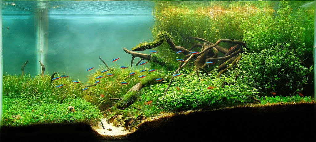 The International Aquatic Plants Layout Contest 2011 526