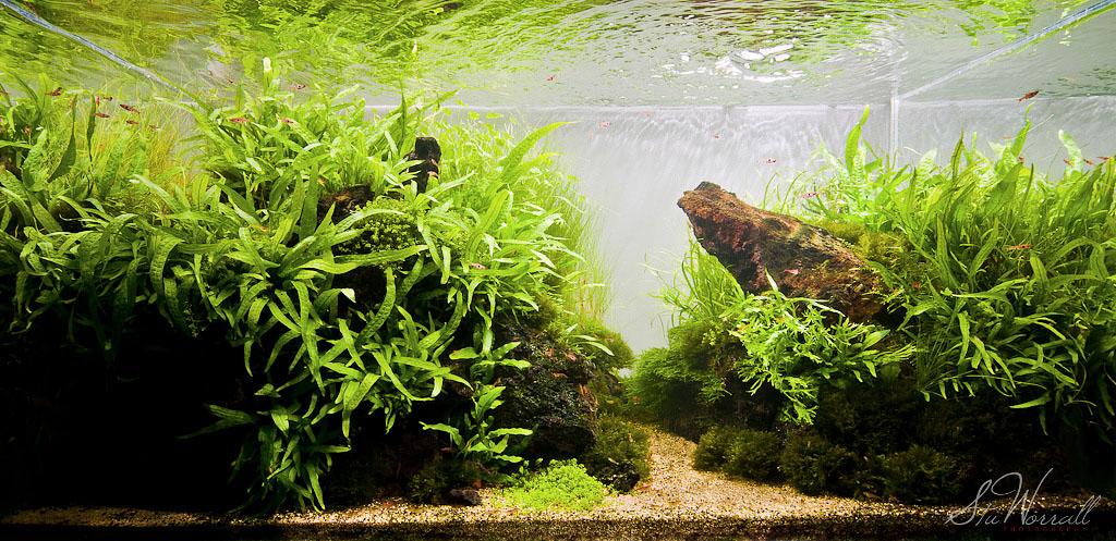 The International Aquatic Plants Layout Contest 2011 557