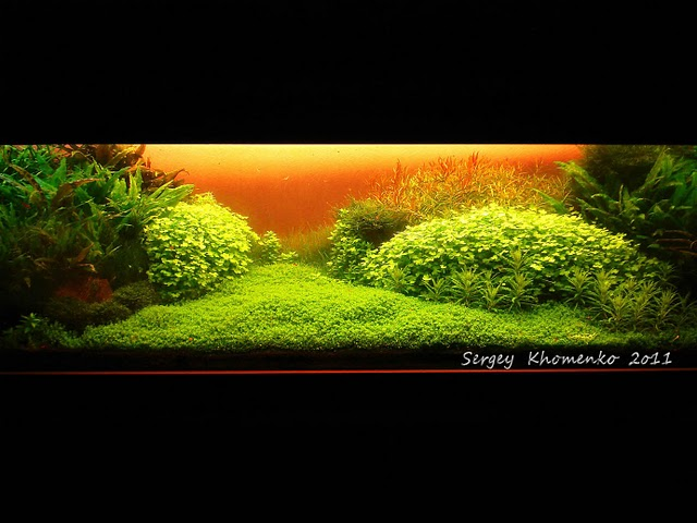 The International Aquatic Plants Layout Contest 2011 558