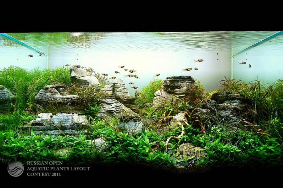 The International Aquatic Plants Layout Contest 2011 57
