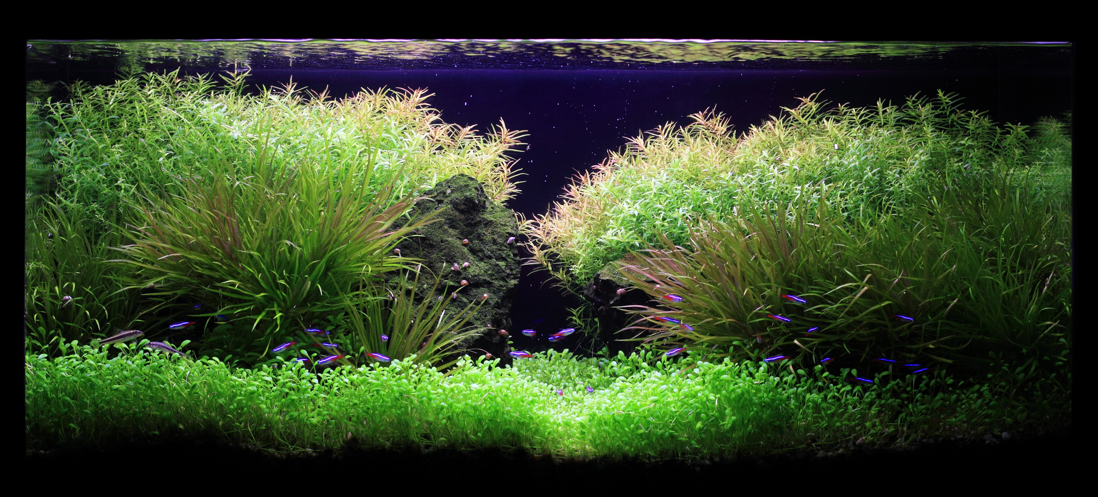 The International Aquatic Plants Layout Contest 2011 582