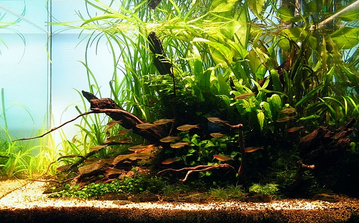 The International Aquatic Plants Layout Contest 2011 627