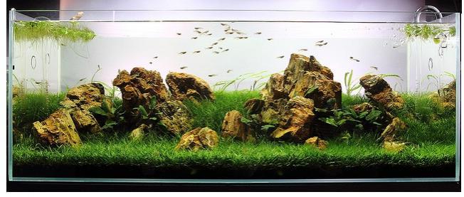 The International Aquatic Plants Layout Contest 2011 64