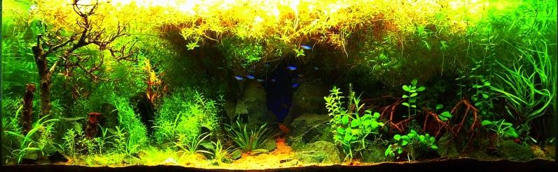 The International Aquatic Plants Layout Contest 2011 648