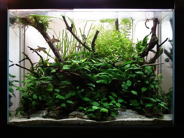 The International Aquatic Plants Layout Contest 2011 661
