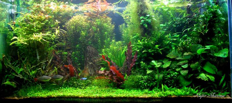 The International Aquatic Plants Layout Contest 2011 689