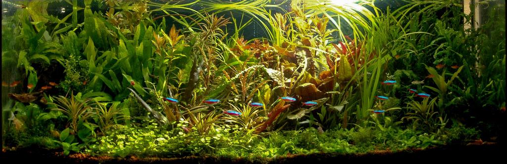 The International Aquatic Plants Layout Contest 2011 698