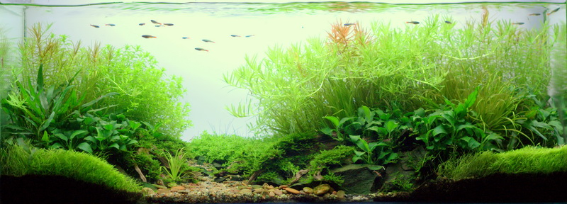 The International Aquatic Plants Layout Contest 2011 731