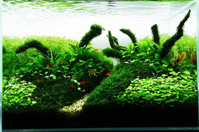 The International Aquatic Plants Layout Contest 2011 737