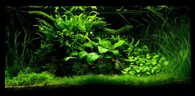 The International Aquatic Plants Layout Contest 2011 777