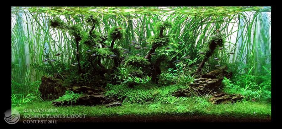 The International Aquatic Plants Layout Contest 2011 79