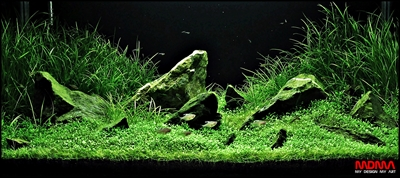 The International Aquatic Plants Layout Contest 2011 81
