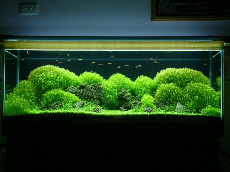 The International Aquatic Plants Layout Contest 2011 861