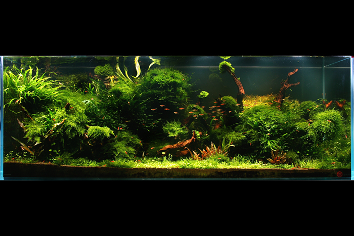 The International Aquatic Plants Layout Contest 2011 897