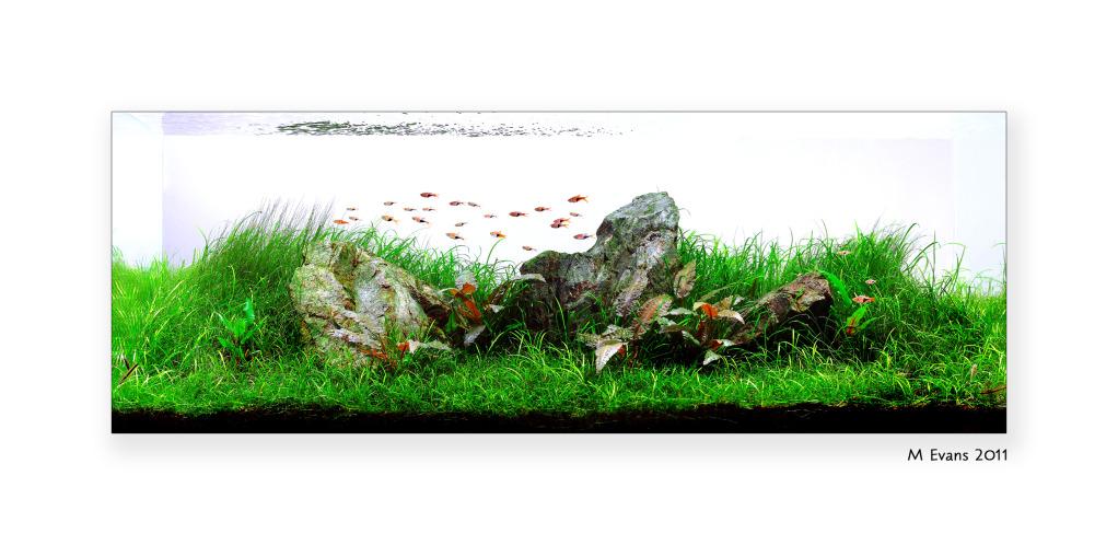The International Aquatic Plants Layout Contest 2011 95