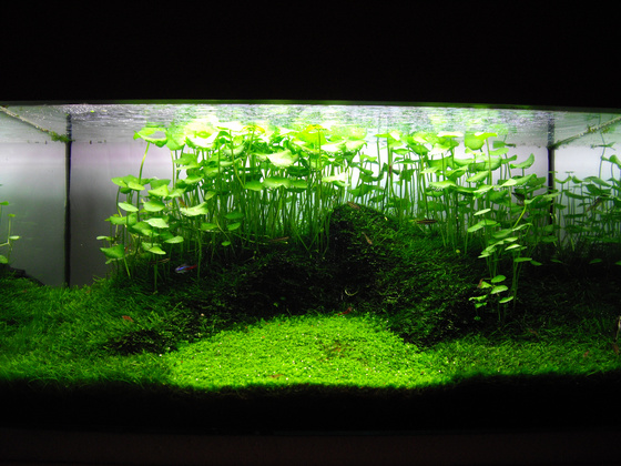 The International Aquatic Plants Layout Contest 2011 950