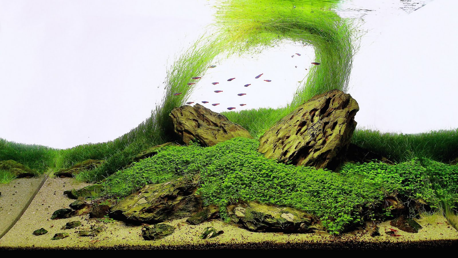 The International Aquatic Plants Layout Contest 2011 97