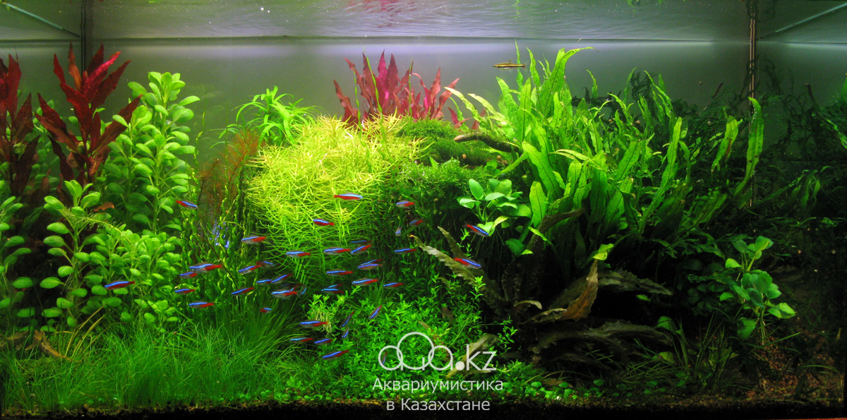 The International Aquatic Plants Layout Contest 2011 990