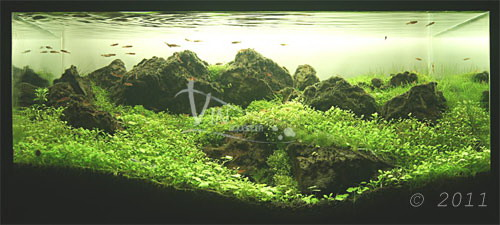 The International Aquatic Plants Layout Contest 2011 Maybe-ranking-356