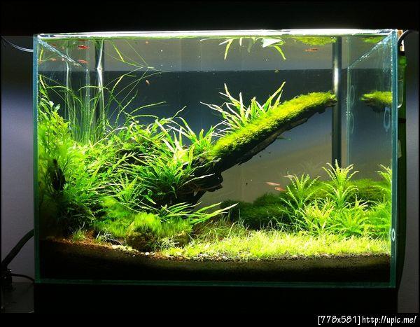 The International Aquatic Plants Layout Contest 2011 Rank-1130