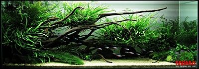 The International Aquatic Plants Layout Contest 2011 Rank-132