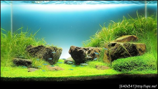 The International Aquatic Plants Layout Contest 2011 Rank-134