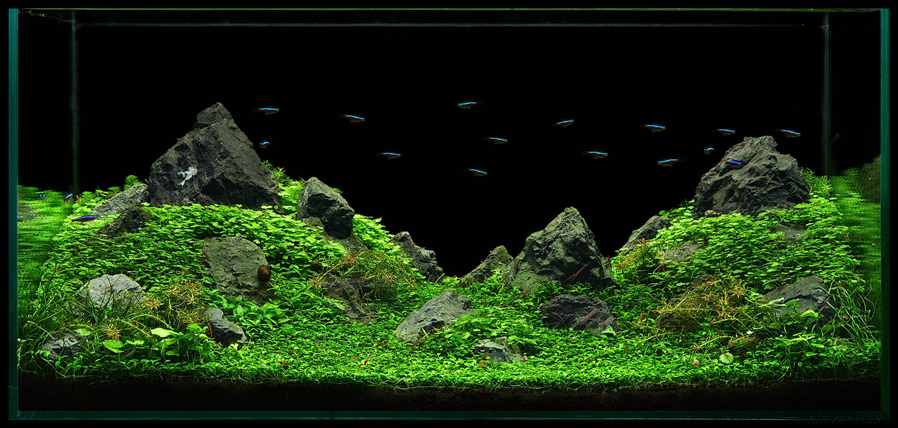 The International Aquatic Plants Layout Contest 2011 Rank-169