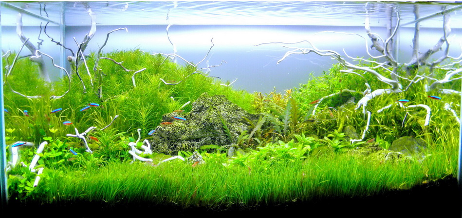 The International Aquatic Plants Layout Contest 2011 Rank-587