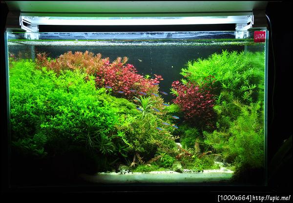 The International Aquatic Plants Layout Contest 2011 Rank-606