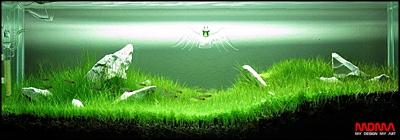The International Aquatic Plants Layout Contest 2011 Rank-751