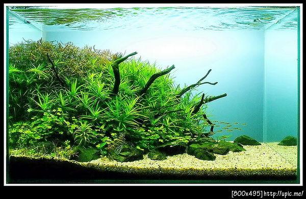 The International Aquatic Plants Layout Contest 2011 Rank-762
