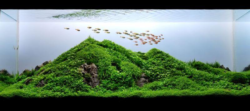 The International Aquatic Plants Layout Contest 2011 Ranking-055