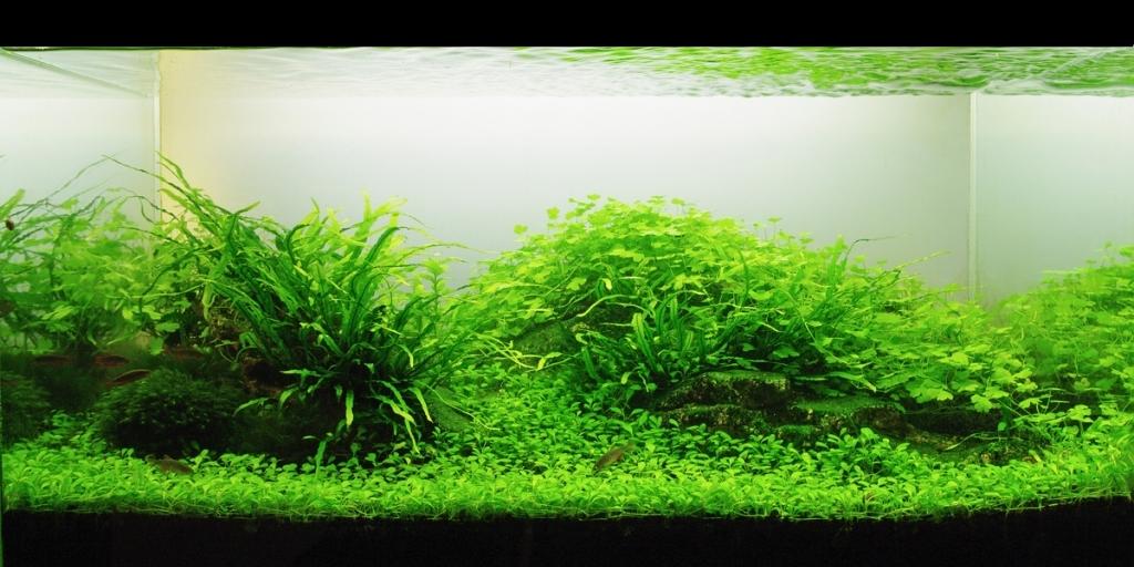 The International Aquatic Plants Layout Contest 2011 Ranking-1025
