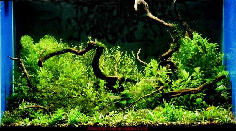 The International Aquatic Plants Layout Contest 2011 Ranking-1106