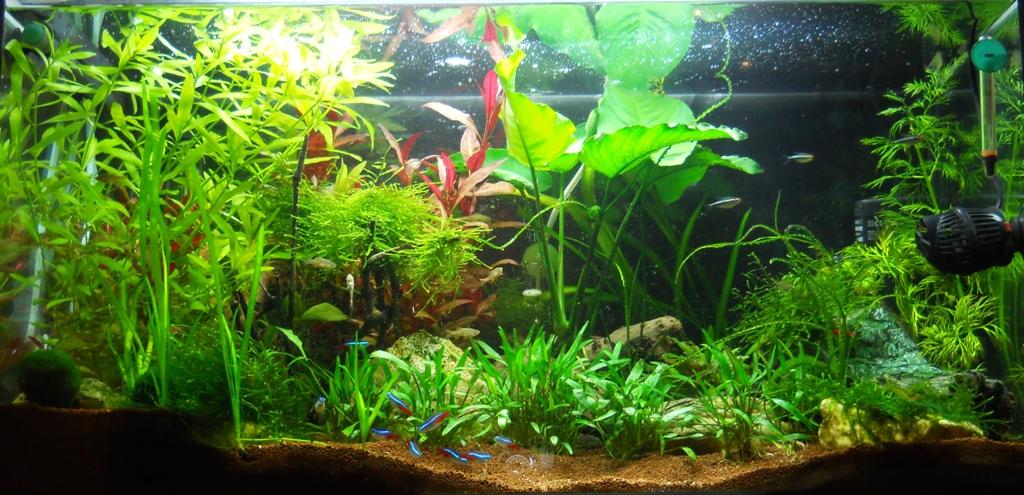 The International Aquatic Plants Layout Contest 2011 Ranking-1466