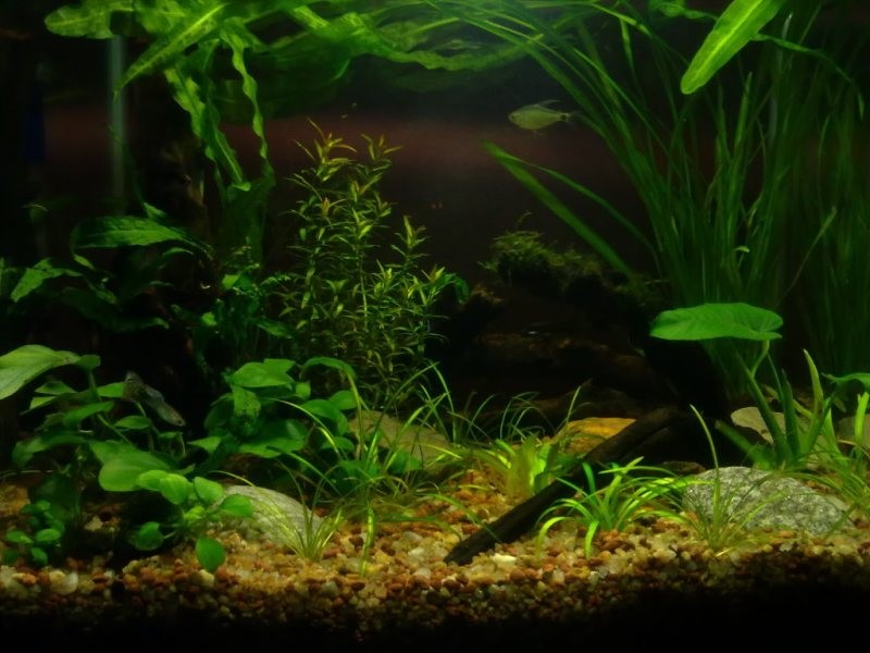 The International Aquatic Plants Layout Contest 2011 Ranking-1503