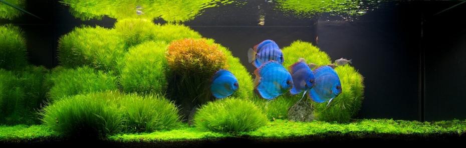 The International Aquatic Plants Layout Contest 2011 Ranking-170