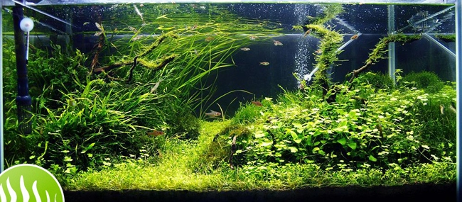 The International Aquatic Plants Layout Contest 2011 Ranking-456