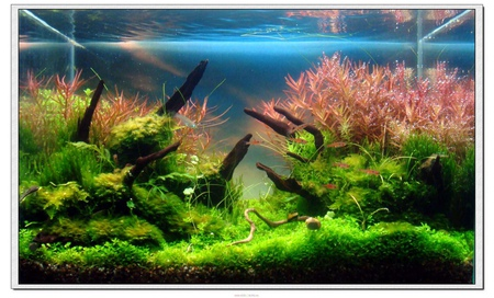 The International Aquatic Plants Layout Contest 2011 Ranking-471