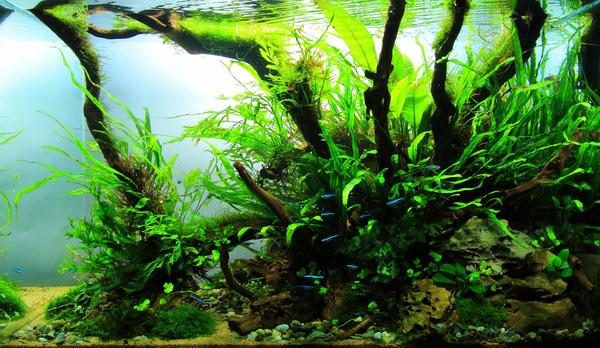 The International Aquatic Plants Layout Contest 2011 Ranking-487