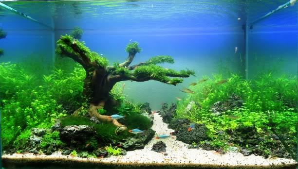 The International Aquatic Plants Layout Contest 2011 Ranking-873