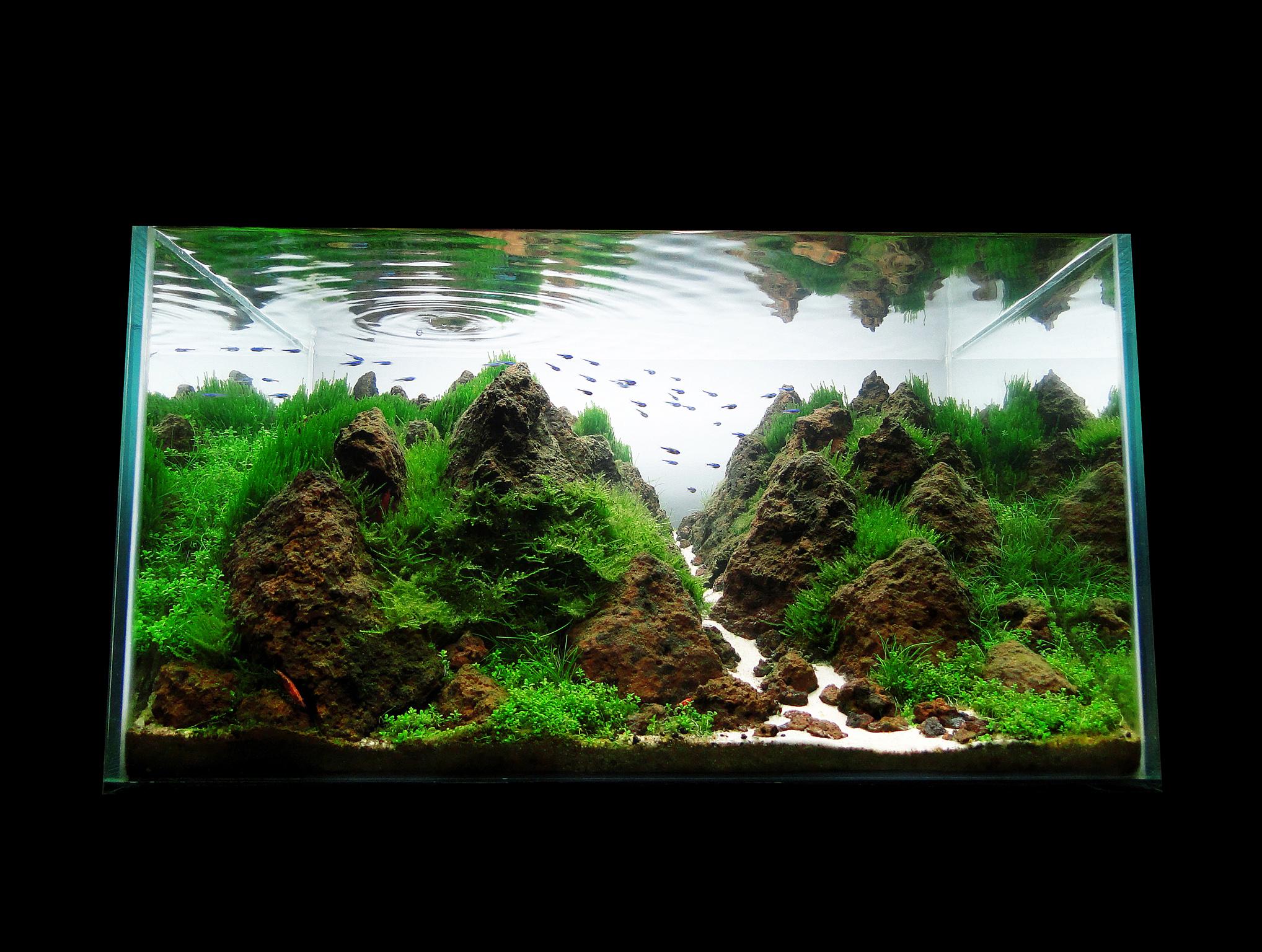 Cl nica acuario rosa p gina 5 - Montaje de acuarios ...